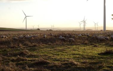 Wind farm in Australia. Author: Steven Caddy. License: Creative Commons, Attribution 2.0 Generic