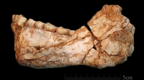The mandible found at Jebel Irhoud, Morocco. It is the first, almost complete adult jaw bone discovered at the site.