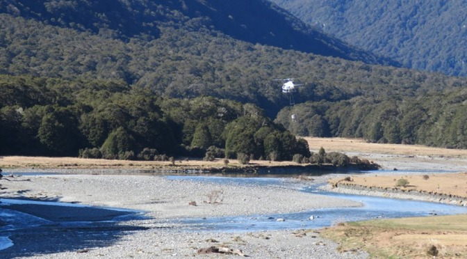 Workers report that nothing is alive now … no birds, no insects, nothing! … at recently 1080'd Wilkin River Vlly, Mt Aspiring Ntl Park